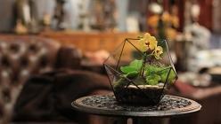 Флорариум – экологичная новинка для интерьера